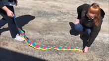 Snake Measurement Activity